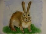 Rabbit, Charlie Castor, Robbie the Rabbit